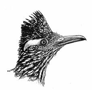 roadrunner-drawing_180
